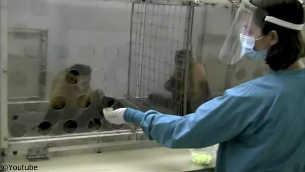 monkey fairness experiment