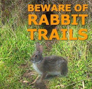 rabbit trails