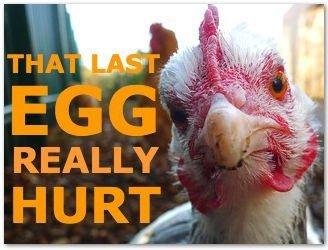 that egg hurt